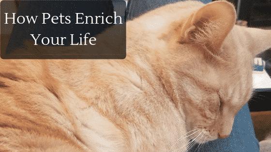pets enrich your life